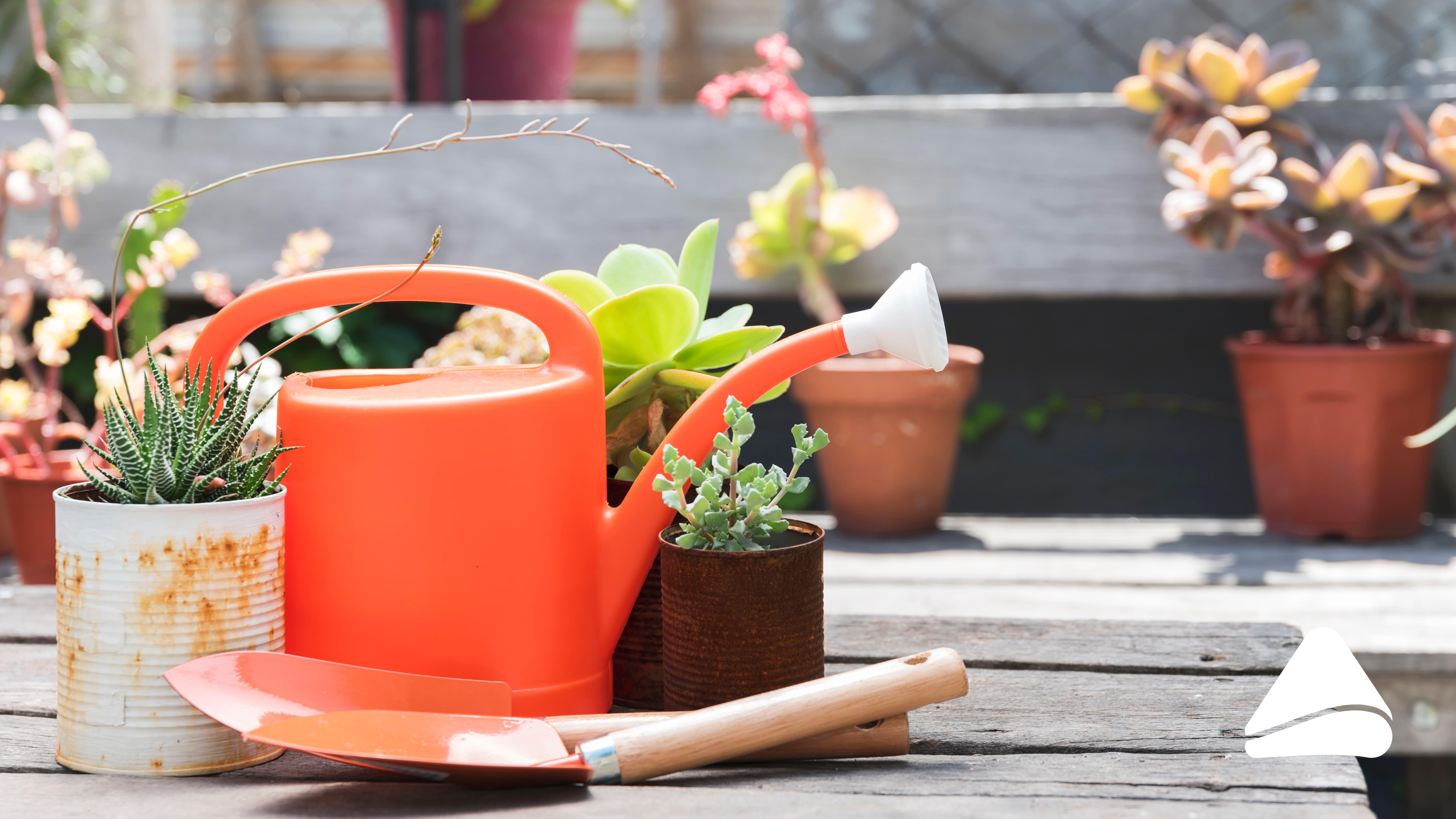 6 dicas para manter as plantas da sua casa saudáveis no inverno